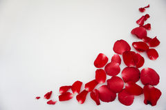 Rose. Red background love flowers beautiful valentine& x27;s Stock Photo
