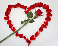 Rose. Red background love flowers beautiful valentine& x27;s heart Royalty Free Stock Photography
