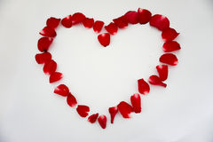 Rose. Red background love flowers beautiful valentine& x27;s heart Stock Photo