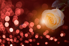 Rose on red bokeh background Royalty Free Stock Photo