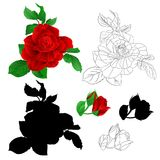 Rose red with buds and leaves natural and outline and silhouette vintage Festive background vector illustration editable. Hand draw Royalty Free Stock Image