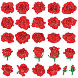 Rose red drawing line set Royalty Free Stock Photo