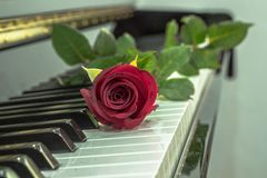 A rose. A red rose on the piano Stock Photos