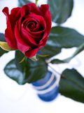 Rose - Red rose in vase Stock Images