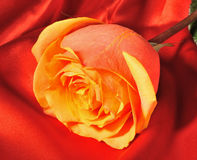 Rose on red silk Royalty Free Stock Image