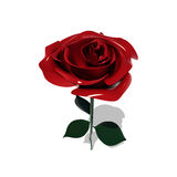 Rose. Red rose on a white background royalty free illustration