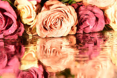 Rose and the reflection on the surface Royalty Free Stock Photography