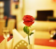 Rose on a Restaurant Table. A rose flower as a table decor in a restaurant Royalty Free Stock Photo