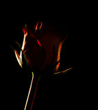 Rose silhouette Royalty Free Stock Photo