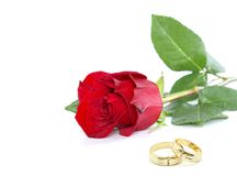 Rose and ring Stock Image