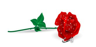 Rose and ring. Red rose and diamond ring Stock Photos