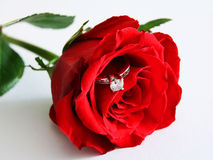 Rose and ring 2 stock image