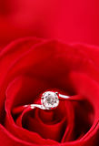 Rose with ring Stock Photos