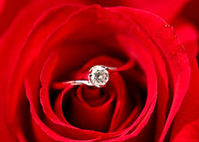 Rose with ring Stock Images