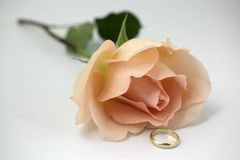 A rose and a ring. Golden ring placed down with a pink rose royalty free stock photos