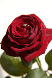 Rose&ring. Red rose with diamond ring stock image