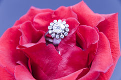 Rose and ring Royalty Free Stock Photography