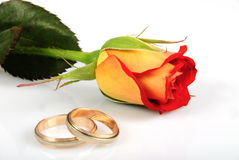 Rose and rings stock photo