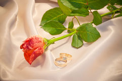 Rose and rings Royalty Free Stock Photos