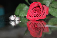 Rose with rings Stock Photography