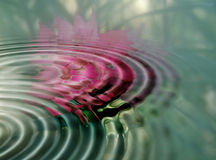 Rose ripples. Underwater rose reflected in the ripples vector illustration