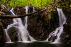 Rose River Falls, vista durante a mola no parque nacional de Shenandoah Fotografia de Stock Royalty Free