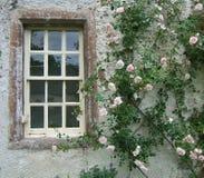 rose roamingu Zdjęcia Royalty Free