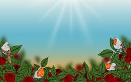 Rose and robin bird background by hand drawing. Beautiful flower on white background.Rose art highly detailed in line art style.Rosa queen elizabeth rose for Royalty Free Stock Images