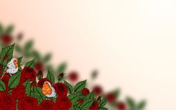 Rose and robin bird background by hand drawing. Beautiful flower on white background.Rose art highly detailed in line art style.Rosa queen elizabeth rose for Royalty Free Stock Photo