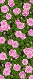 Rose and robin bird background by hand drawing. Beautiful flower on white background.Rose art highly detailed in line art style.Rosa queen elizabeth rose for Royalty Free Stock Photography