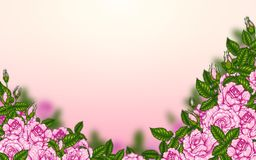 Rose and robin bird background by hand drawing. Beautiful flower on white background.Rose art highly detailed in line art style.Rosa queen elizabeth rose for Stock Photos