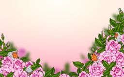 Rose and robin bird background by hand drawing. Beautiful flower on white background.Rose art highly detailed in line art style.Rosa queen elizabeth rose for Stock Photography
