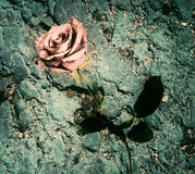 Rose on a Rocky Texture Background - Grunge Royalty Free Stock Photography