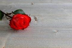 Rose roja con el tallo y hojas en el fondo de madera Imagen de archivo