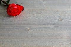 Rose roja con el tallo y hojas en el fondo de madera Fotos de archivo libres de regalías