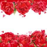 Rose roja Corazón y fondo rojos de rosas rojas watercolo Imagenes de archivo