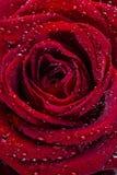 Rose roja - día de tarjetas del día de San Valentín Foto de archivo