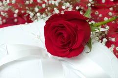 Rose roja en la almohadilla blanca Fotografía de archivo