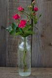 Rose roja en una botella Imagen de archivo