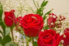 Rose roja especial con un anillo Fotografía de archivo