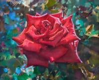 Rose roja hermosa Fotos de archivo