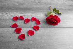 Rose roja y pétalos dispuestos en forma del corazón Foto de archivo libre de regalías