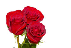 Rose and Romance Royalty Free Stock Images