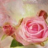 Rose, romantic card. Stock Photo