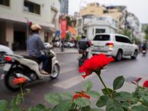 Rose romantiche rosse che crescono accanto alla strada Fotografie Stock Libere da Diritti