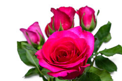 Rose rosa Immagine Stock