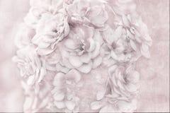Rose rosa. Fotografie Stock