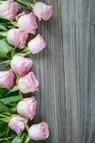 Rose rosa Fotografie Stock