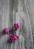 Rose rosa asciutte Fotografie Stock
