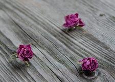 Rose rosa asciutte Fotografia Stock